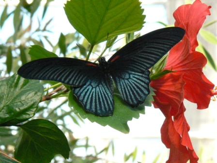 Sertoma Butterfly House