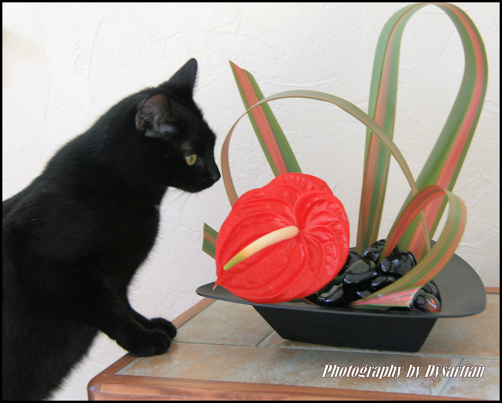 Millie Cat Likes Modern Flower Arrangements - My Most Viewed Shot