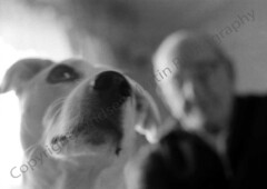 img068 (lm.photograpy) Tags: old dog grandfather