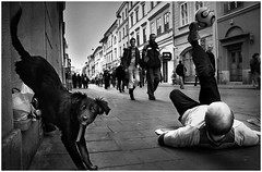 Juggler (Mieszko Stanislawski) Tags: show street bw dog money animal work football pavement poland krakow social tourist player beggar problem misery moment juggling guiness freetime performer job crisis begging mercy unemployment decisivemoment touristic decisive perfomance earning kukla andrzejkukla