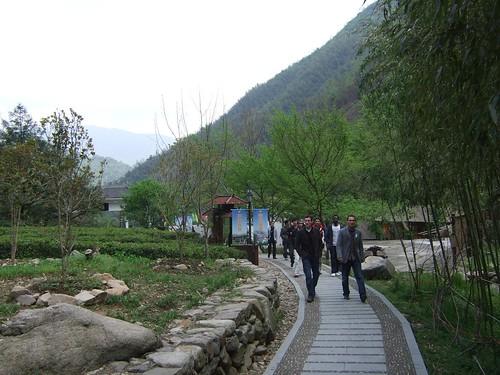 Near Linan