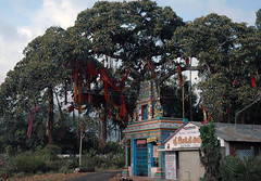 Oh! God (Koshyk) Tags: red tree temple fig colourful tamil banyan tamilnadu bodhi tenkasi aal burh langot bargat