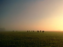 Brittain Territory (circulating) Tags: morning light shadow sky mist field grass fog rural sunrise landscape dawn interestingness haze cattle cows farm kentucky ky horizon scenic explore pasture land agriculture naturesfinest rtist firsthand gravescounty thisisky
