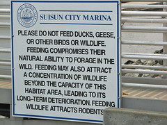 Please Do Not Feed Ducks