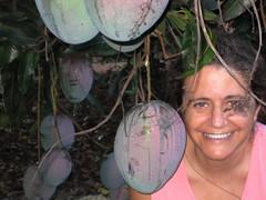 (parttimefarm) Tags: brasil fruit tia manga mango lu echapora