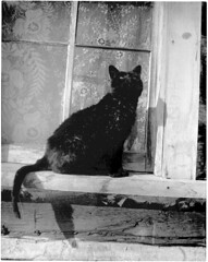 Cat in window (Douglas County History Research Center) Tags: history window glass cat blackcat whatevertheweather archive ledge frame scanned archives oldphotographs oldpictures everything oldphotos dcl anything vintagephotos lacecurtains antiquephotos flickritis norules archivists glassplatenegative historicandoldphotos anythingeverything anythingallowed antiquephotographs glassnegatives thebiggestgroup anythingandeverything 1millionphotos 10millionphotos scannedphotographs themostphotos tenmillionphotos thewholecaboodle fadedphotographs douglascountylibraries 5millionphotos historicimage douglascountyhistoryresearchcenter archivesonflickr onemillionphotos douglascountyhistoricalsociety dchrc archivesandarchivists theanythinggroup allyoulike bwfoundphotos 100000000flickrphotos fivemillionphotos 19920010xxx0g03