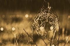 Tension Span (Jooliree) Tags: light bokeh cobweb lith twigs laforge rawimage photoshopdreambluraction ~jaj43123 lithprintaction