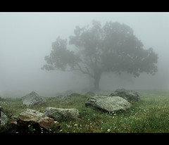 Summer Fog (Stephen's PhotoArt) Tags: tree fog rocks soft hard straight explore25 mtweather