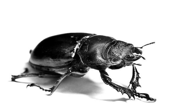 macro shot of beetle