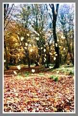 (daniyal_harandi) Tags: autumn trees tree fall iran persia