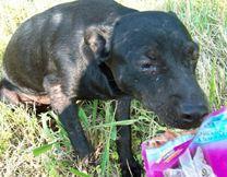 Kinship Circle - 2008-09-06 - Gustav - Harder Hit SE Louisiana Needs Help 01