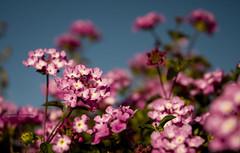Olor (yoop_) Tags: flores flower flor yoop naturesfinest artisticexpression d80 anawesomeshot florciñas