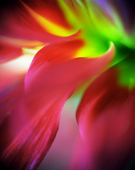 The origins of fire (Zeb Andrews) Tags: dahlia red abstract flower color macro green 120 film floral closeup oregon mediumformat pacificnorthwest flowing kodakportra160vc excellence macrophotography pentax6x7 bluemooncamera zebandrews abstractflowerpart zebandrewsphotography