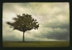 storm (biancavanderwerf) Tags: storm blur tree art lensbaby clouds landscape lonely bianca dreamcatcher lensbabie fiatlux analoge creattivit graphicmaster