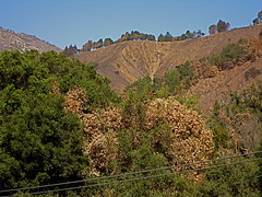 Scorched and denuded hills above Big Sur