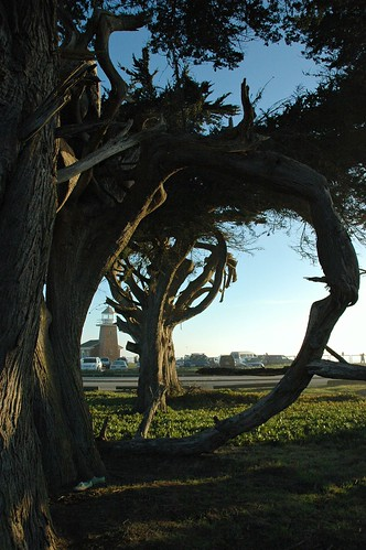 Reflection Circle, Monterey cypress, arched trees, Lighthouse, cars, Santa Cruz, California, USA by Wonderlane