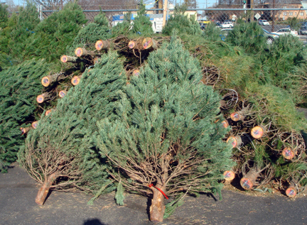 3-trees