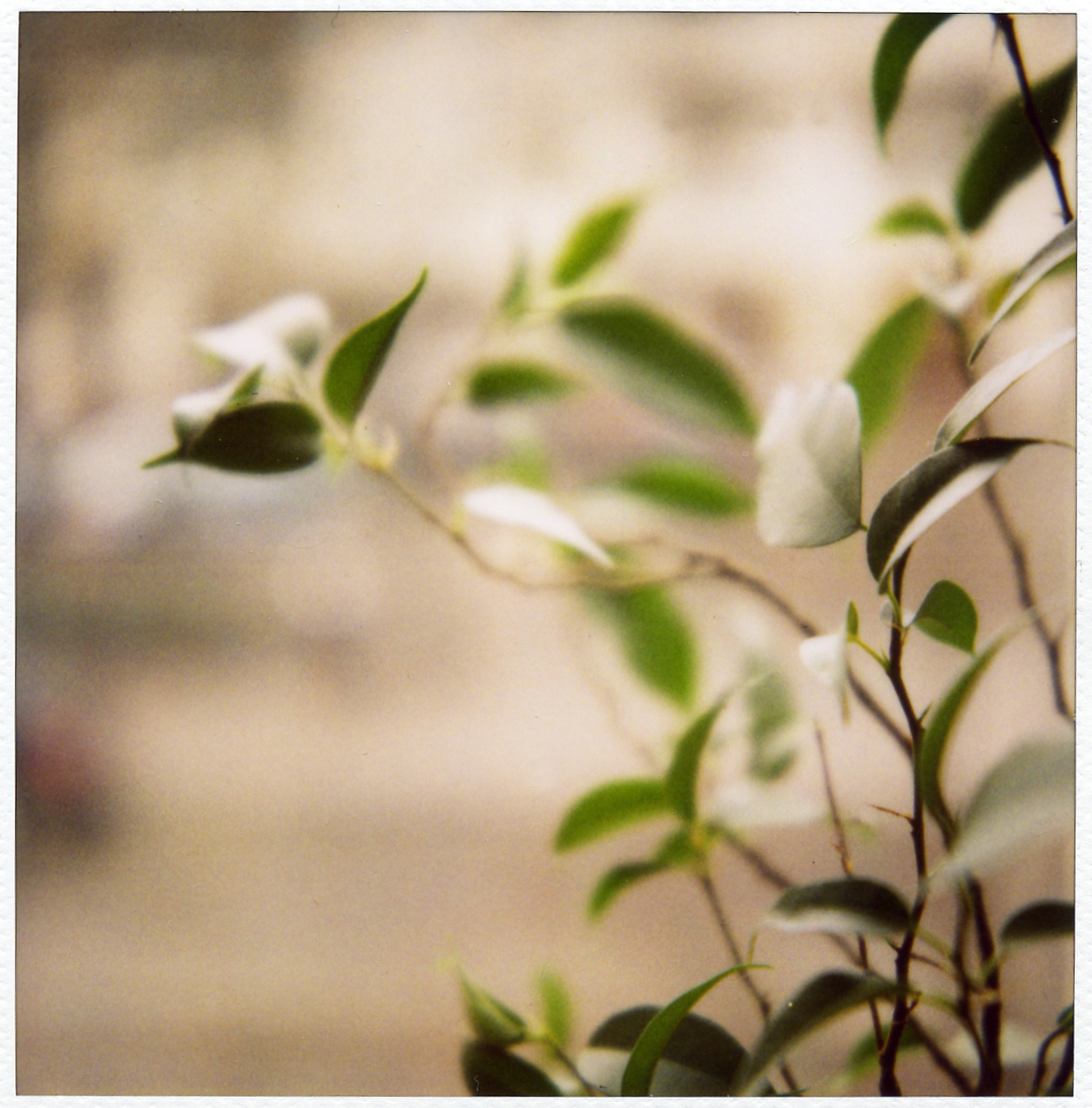First SX-70 shots