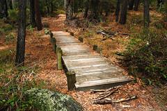 Ben Boyd National Park IMG_2961_Ben_Boyd_National_Park