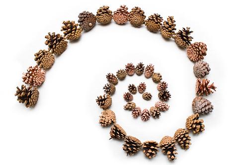 Fibonacci Cones