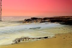 Crazy Beach (A.alFoudry) Tags: ocean pink sea summer bw tree beach water yellow rock sunrise canon eos gold movement sand rocks waves branches wave full filter shore frame 5d kuwait usm fullframe 2008 canonef2470mmf28lusm ef kuwaiti salmiya q8 abdullah  cokin polarizing 2470mm  canoneos5d  f28l kuw q80  xnuzha alfoudry salmeya  abdullahalfoudry  foudryphotocom anjefa anjafa