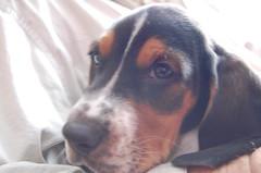 Lovejoy's new puppy Roscoe