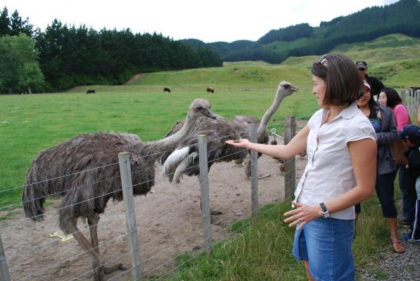 emu_feeding_1
