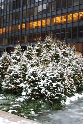 On Park Ave - Snowy