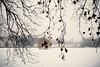 Schneeweihriges (Tanja Deuß) Tags: schnee winter snow ice germany fourseasons düsseldorf duesseldorf winterwonderland schlosbenrath schlosweiher
