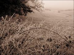 Winter Landscape, Oxfordshire (Martin Beek) Tags: winter cold hiver frosty wintertime coldweather oxfordshire winterlandscape snowandice imagesofwinter winterphotographyandart ©martinbeek2010