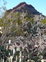 Papago Peak (alist) Tags: phoenix garden botanical desert alicerobison