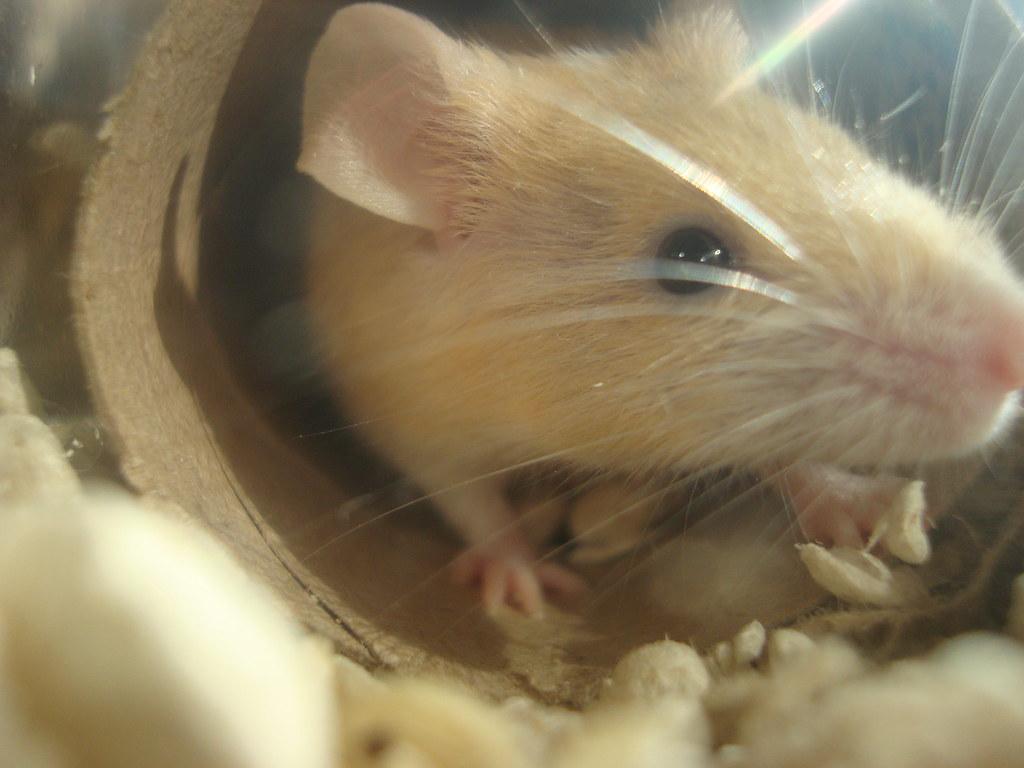 Un roedor del grupo tiernos rodeores de Flickr