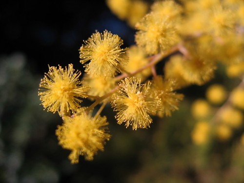 2009-01-30_blooms_zoom.jpg