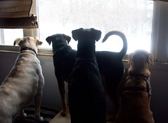 Window_4Dogs_2109c