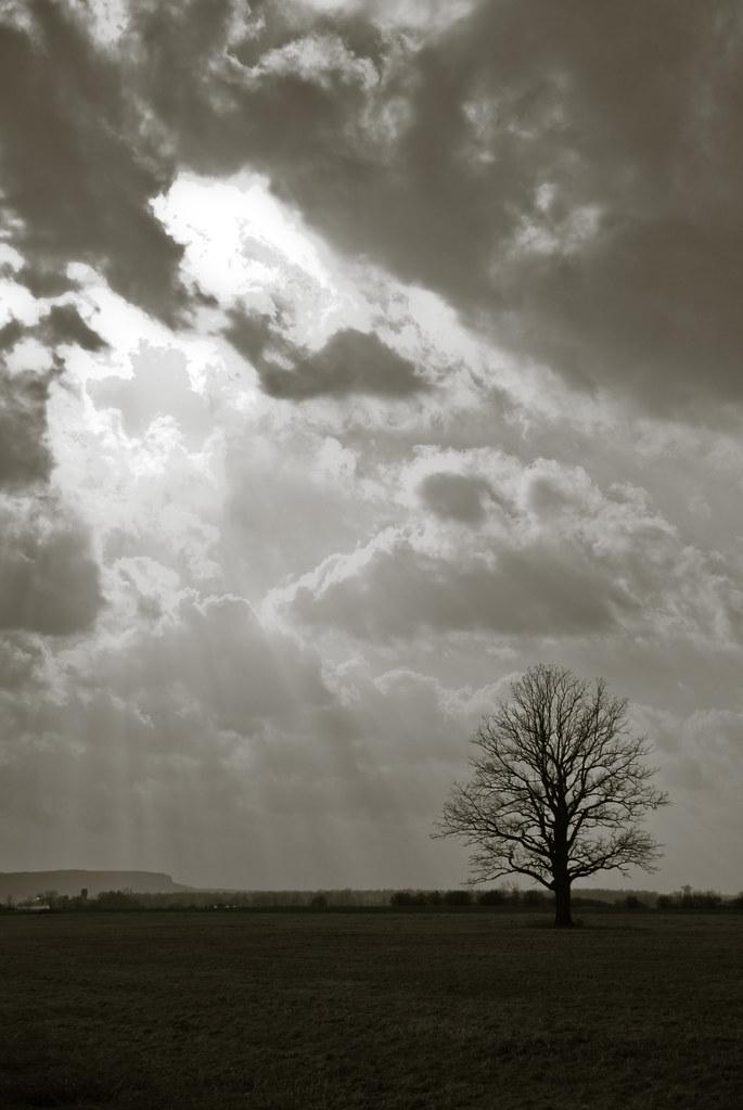 Trees-0286.jpg