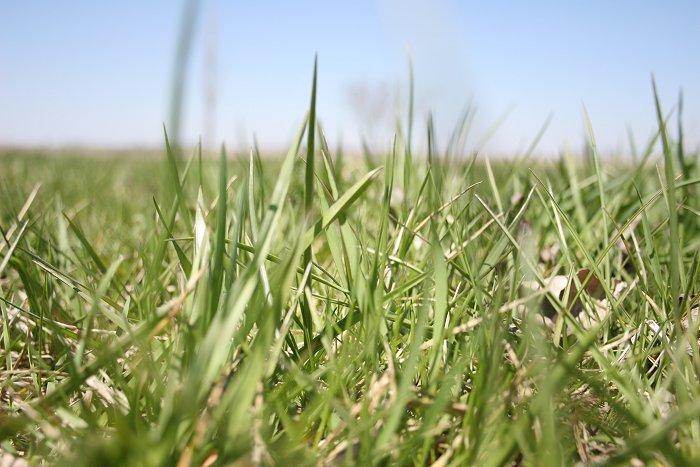 04-23-grass