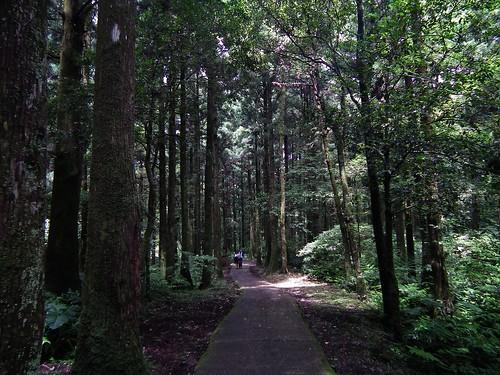 東眼山_09_森林浴步道_ 20110614