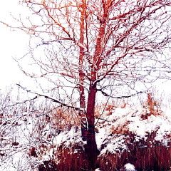 My Wild River Revolution!!! :))) (Denis Collette...!!!) Tags: winter wild snow canada reflection tree art river quebec hiver rivire reflet revolution neige arbre sauvage themoulinrouge portneuf firstquality artlibre superbmasterpiece pontrouge deniscollette wildriver riviresauvage world100f tracychapman talkingaboutarevolution