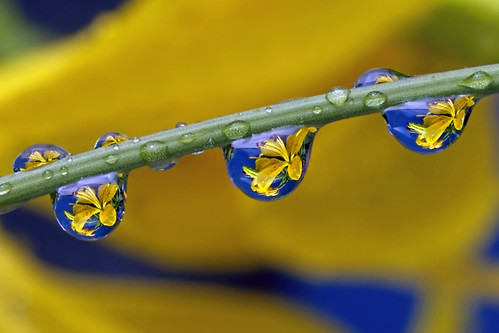 itty-bitty iris drops