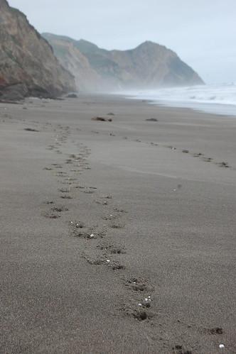 Styrofoam-Filled Deer Tracks on the Beach