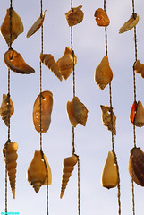HangingShells (mcshots) Tags: california sky usa shells home seashells yard coast losangeles images patio socal string mcshots southbay twine
