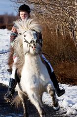Crazy horse (Villi.Ingi) Tags: winter horse snow speed canon fast riding rider gallop icelandichorse hestur tlt 40d greitttlt hratttlt yfirferartlt
