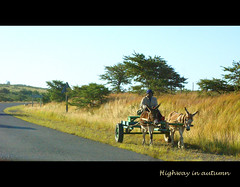 On the road - the highway in autumn (ilsebatten) Tags: road travel donkey cart imagepoetry platinumphoto platinumaward theunforgettablepictures theperfectphotographer goldstaraward