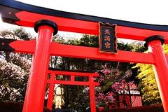 red gates (jemione) Tags: red japan spring gate nikko wonderland torii edo nikon18200vr