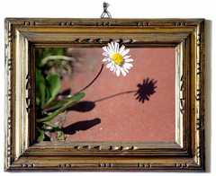 How to Paint a Shadow (Firenzesca) Tags: light shadow flower primavera 3d spring optical quadro illusion frame photomontage daisy effect margherita cornice outofbounds oob outofframe masterphotos artedellafoto