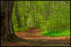 into the green (H o g n e) Tags: wood brown green norway forest spring path horten vestfold naturesfinest norwegianwood norwegianforest platinumphoto anawesomeshot hortensskogen