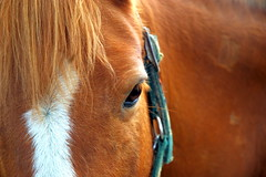 Horse (josephinaphoto81) Tags: portrait horse nature animal hair cheval horsehead paard galope diamondclassphotographer flickrdiamond josephinebouwman josephinaphoto81 paardenhoofd