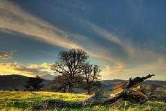jet stream (Marc Crumpler (Ilikethenight)) Tags: california trees sunset usa clouds canon landscape hiking trails hills bayarea eastbay mtdiablo breathtaking ebrpd roundvalley blueribbonwinner contracostacounty eastbayregionalparkdistrict outstandingshots tamron1750 fineartphotos sfchronicle96hours 40d ebparks platinumphoto anawesomeshot aplusphoto megashot canon40d betterthangood theperfectphotographer goldstaraward scenicsnotjustlandscapes spiritofphotography absolutelystunningscapes alemdagqualityonlyclub ebparksok