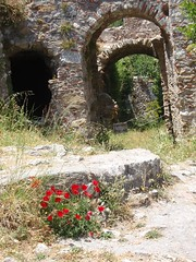 Byzantine ruins with wildflowers (steven_and_haley_bach) Tags: flowers flower wildflowers wildflower byzantine mystras sixthday mistras greecevacation byzantineruins
