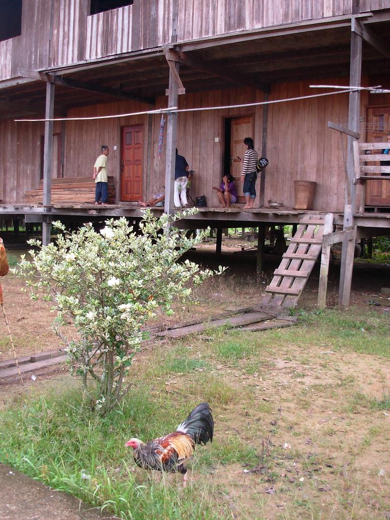 Sarawak-Belaga-LHouses (65)